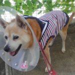 腫瘍切除手術~犬のはなし~